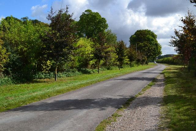 Lane near Leckford plantation