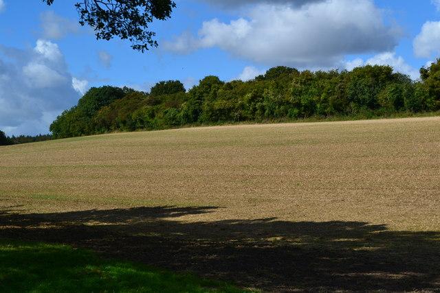 Field beside Bagmore Lane