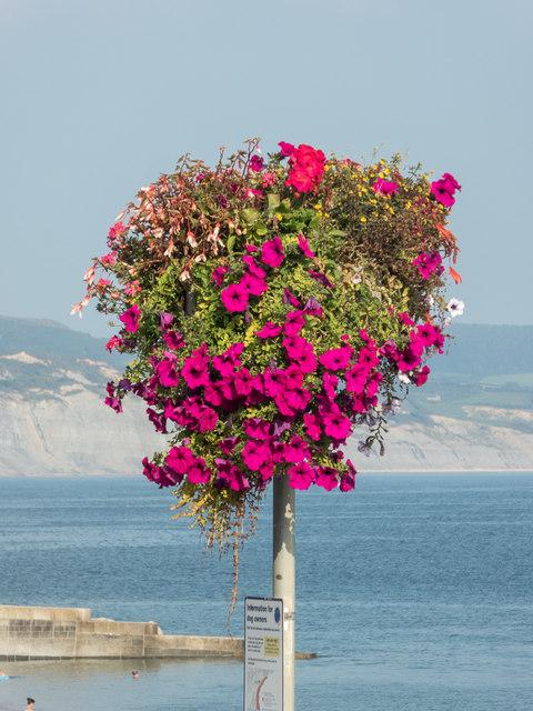Floral Display, Lyme Regis, Dorset