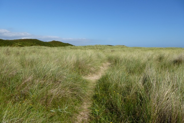 Path on the dunes
