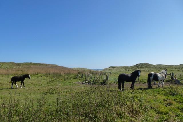 Ponies near Cresswell Pond