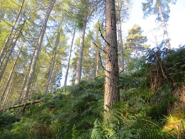 Steep slopes above the Altyre Burn