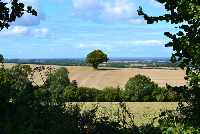 Rolling countryside glimpsed through hedgerow