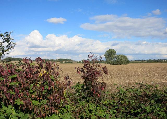 Farmland near Warborough