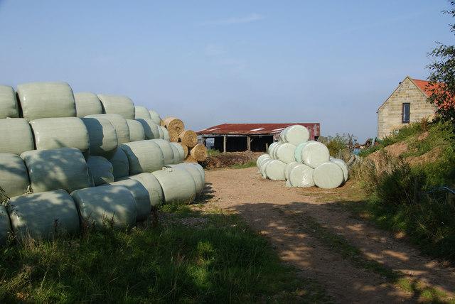 Silage bales at Hagg House Farm