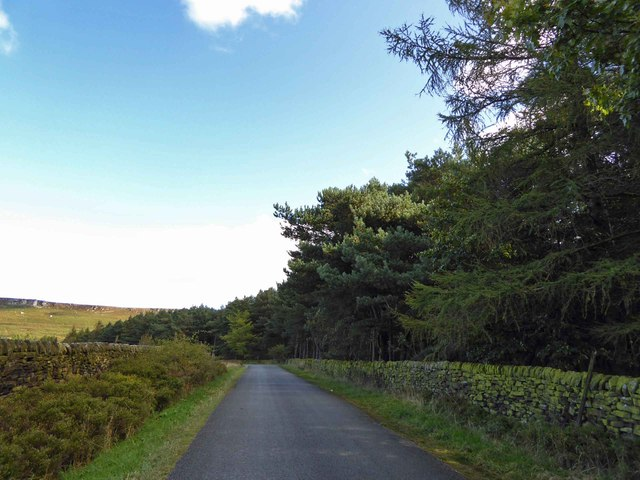 Long Causeway (lane) alongside the wooded Dennis Knoll