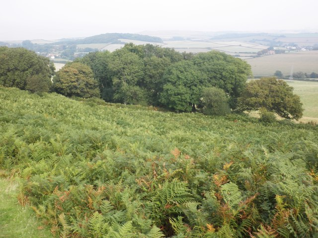 Copse, above 'Higher Ground'