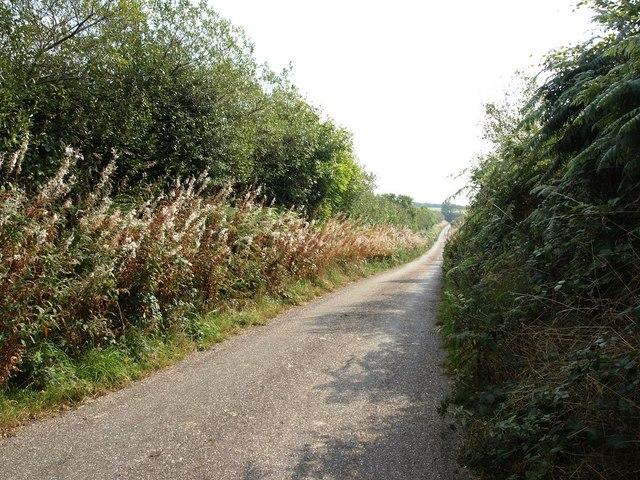 Narrow road with high banks near Bampfylde Hill