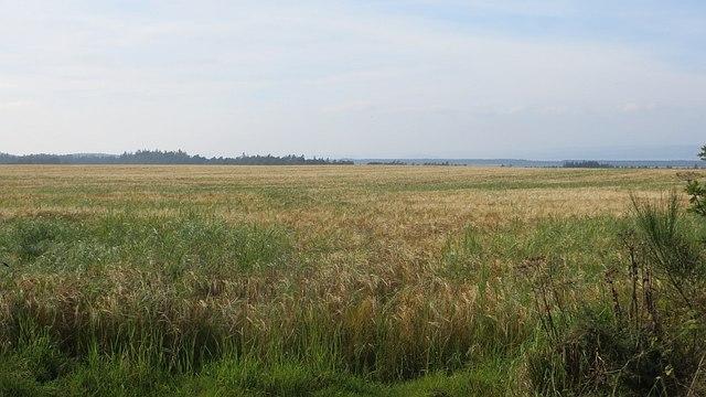 Barley, Urchany