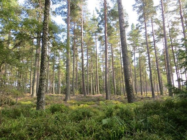 Achneim Wood