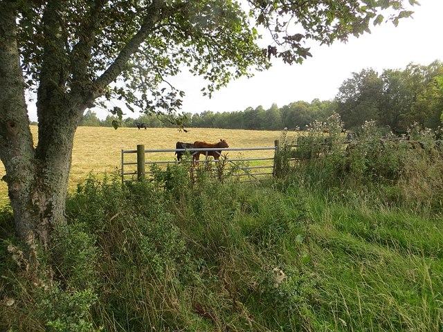 Field near Assich
