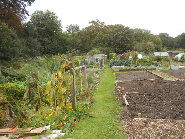 Allotments on Gordon Road, Finchley