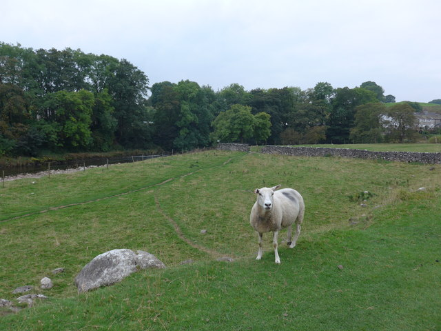 Dales Way trek from Bolton Abbey to Pinder Stile (151)