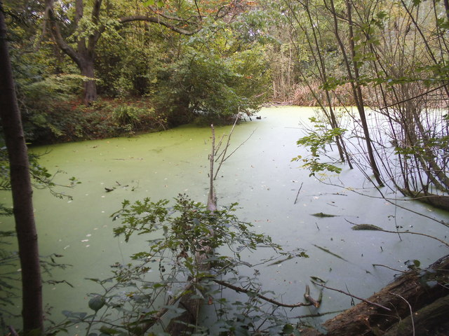 Pond by Dollis Brook, Finchley