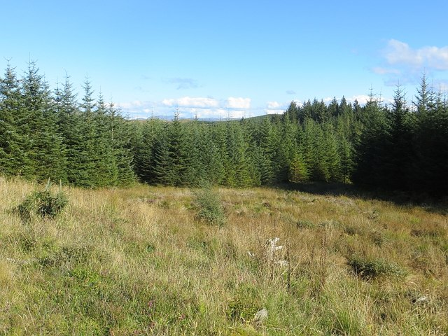 Clearing, Kilmichael Forest