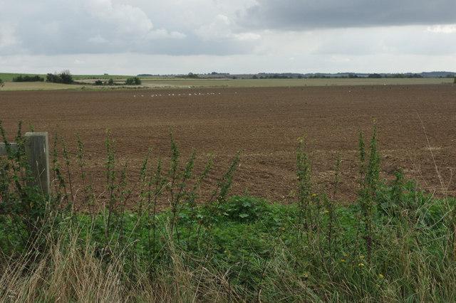 Farmland near Fenstanton