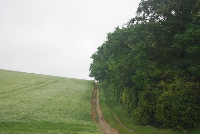 Shelterbelt near Highley Hill