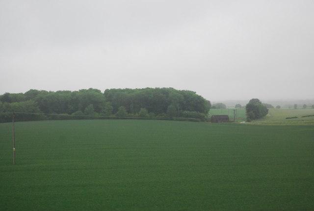 Morden Grange Plantation, New Part
