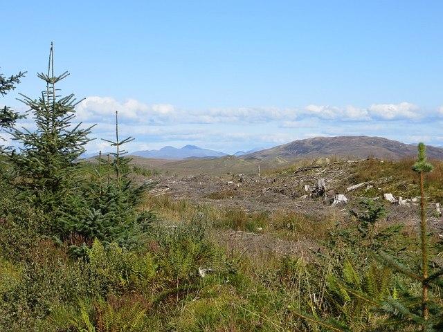 Clear felled area