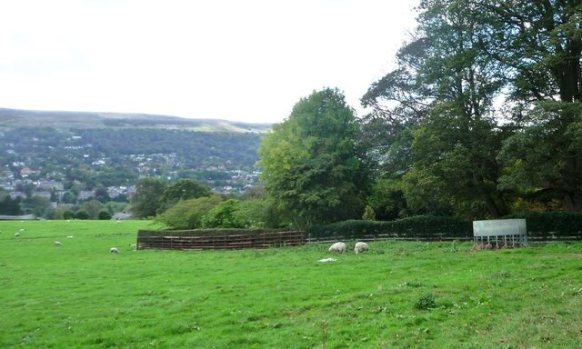 Sheep and feeder, northern slopes of Wharfedale