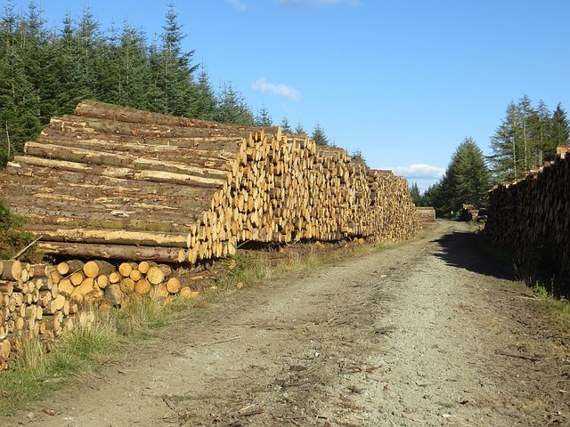 Logging road and logs