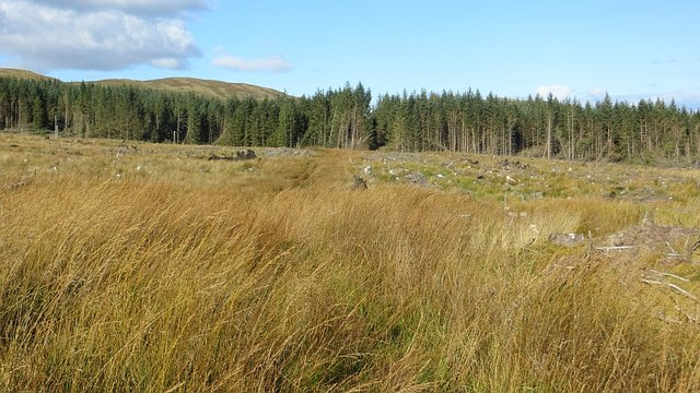 Clearfell, Kilmichael Forest
