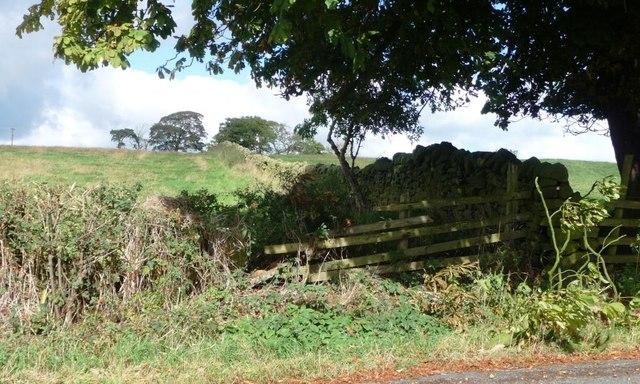 Field boundary at Middleton