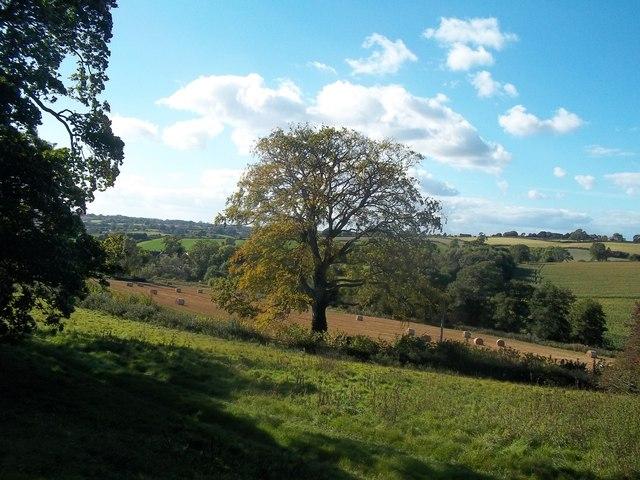 Grassland and Crop Fields near Weston Underwood