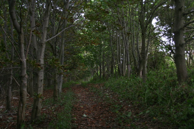 Shady bridleway through Badger Hills