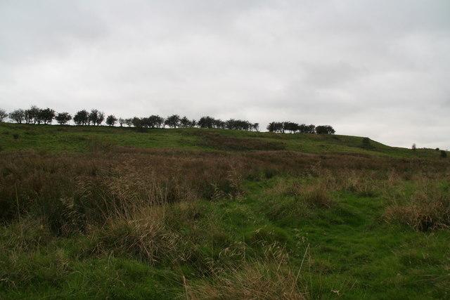 Nettleton Hill