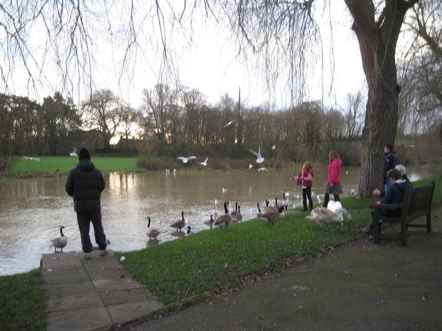 Feeding the birds on Boxing Day, St Nicholas Park, Warwick