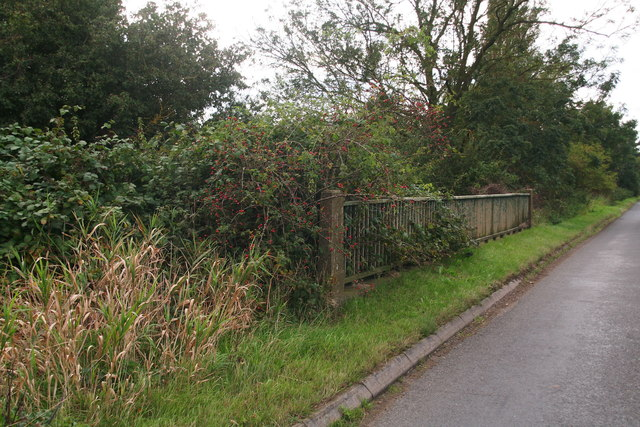 Rose hips growing through Cutley Bridge in Station Road, North Kelsey