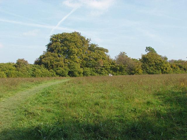 The Meadow, Sheepleas