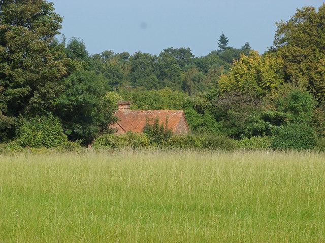Field near West Horsley