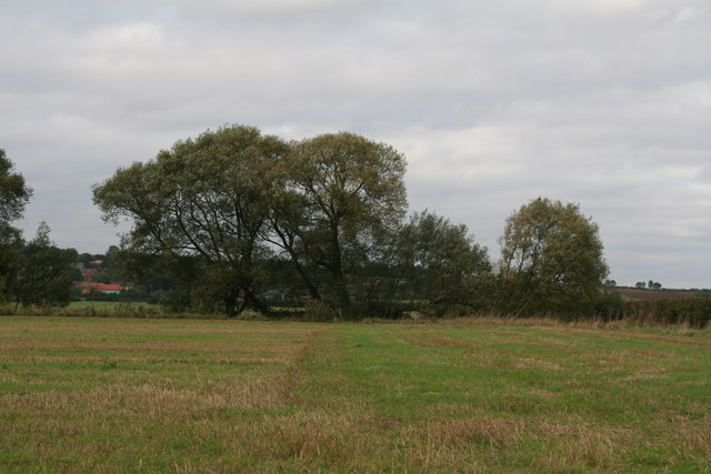 Willows opposite the track to Hill Farm, off Grasby Road