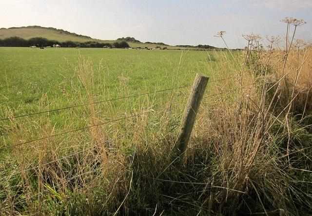 Cattle pasture, Quantock's Head