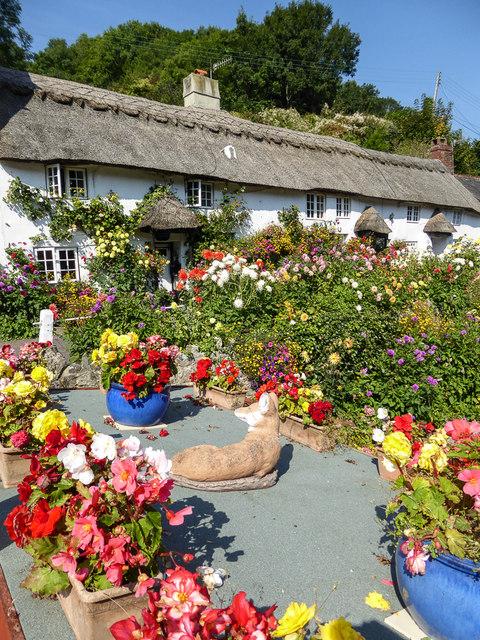 Doreen's Garden, Branscombe, Devon