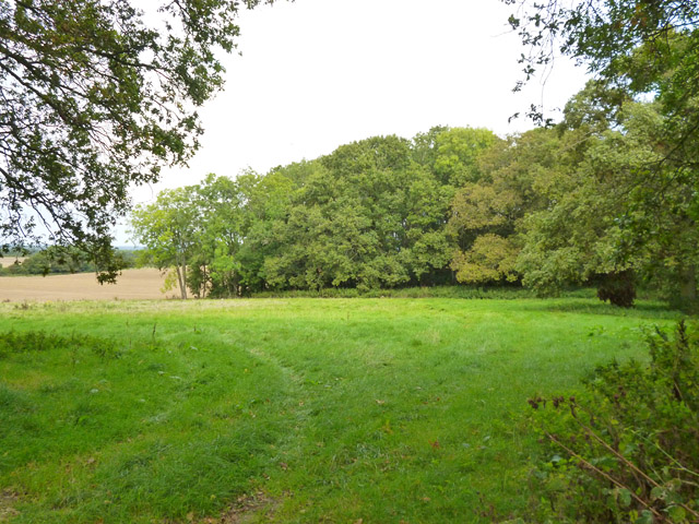 Small wood near Fincham's Copse