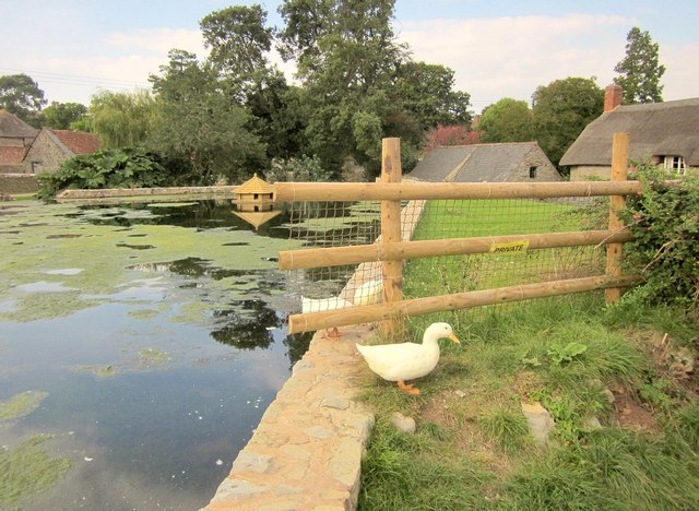 Pond, East Quantoxhead