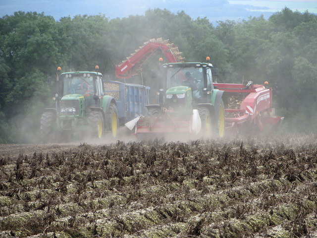 Potato Harvesting near Saxby All Saints