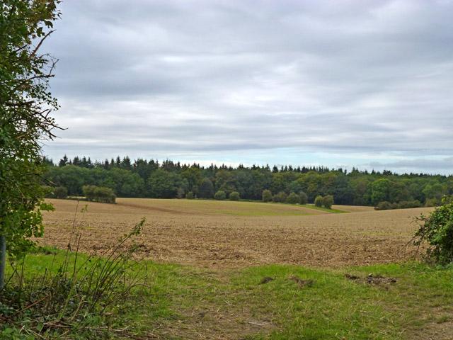 Fields and woods near Long Sutton