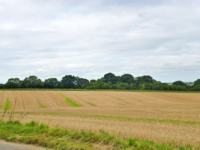 Stubble field east of Froyle Lane