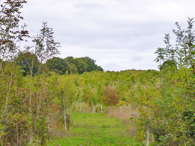 A fairly new plantation