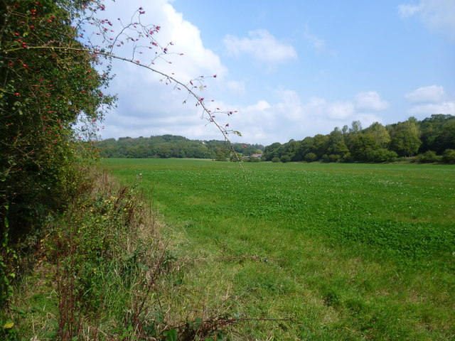 Looking towards Kiln Wood and Hatchlands Farm
