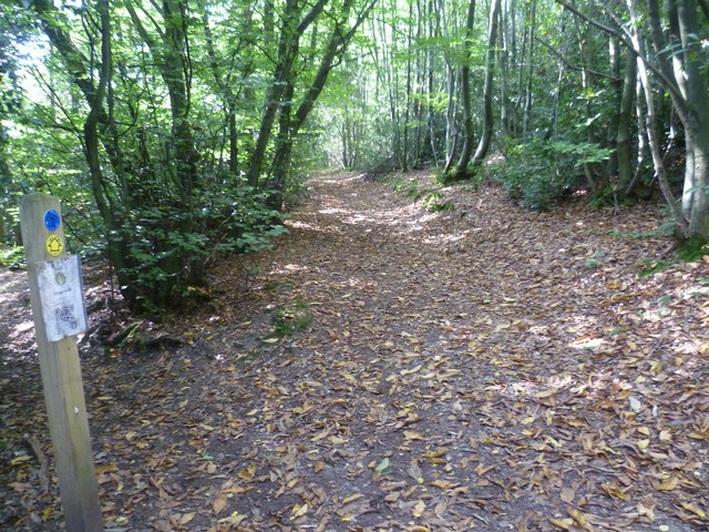 The Greensand Way in Stubbs Wood
