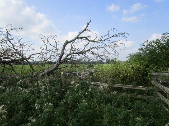 Rather overgrown footbridge