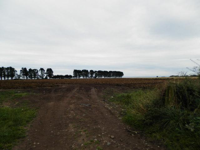 Field near East Scryne