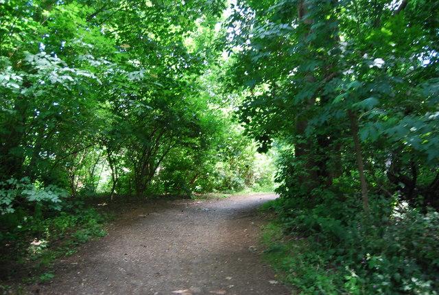 Footpath in Larch Wood