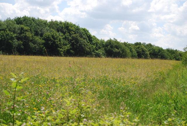 Meadow by Alton Water