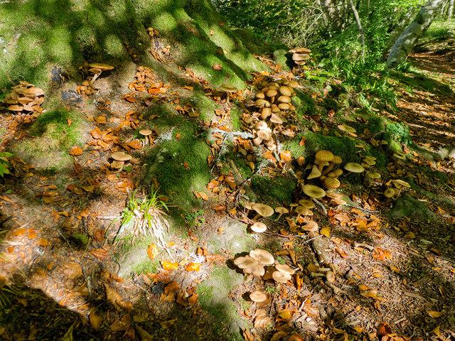 Fungi below a beech in the Logie Estate